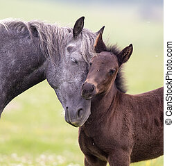 Horse and foal love and care