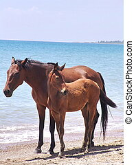 Horse and foal on shore of lake
