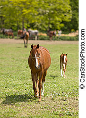 Horse and foal