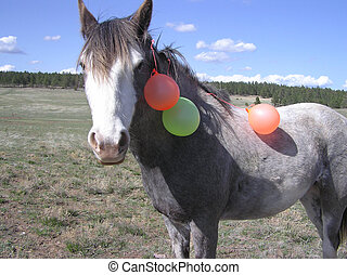 Horse and her baloons