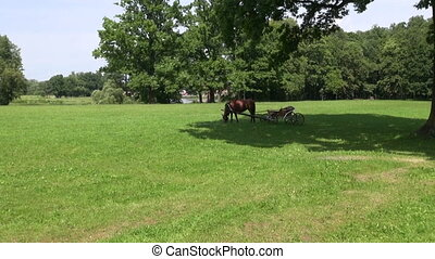 horse and horse drawn-cart carriage on old manor park grass