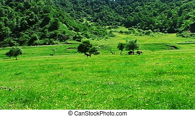 horse and meadow - horses in the meadow.