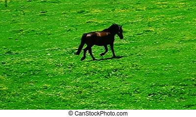 horse and meadow - a horse roaming in the meadow.
