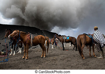 Mount Bromo - Horse and Mount Bromo is an active volcano and...