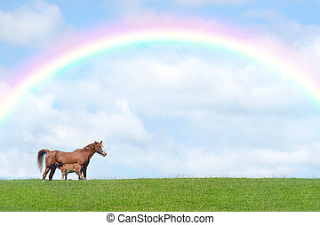 Horse with foal suckling in a field in spring against a blue sky with clouds and a rainbow.
