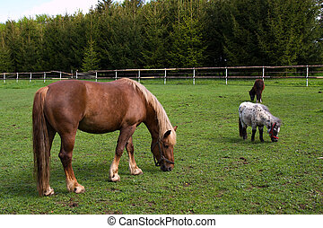 Horse and pony in the meadow in the paddock