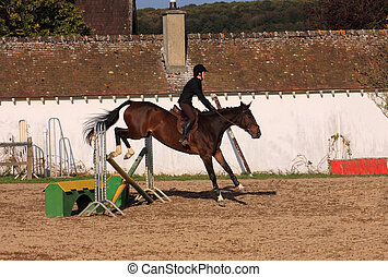 horse and rider has a jumping contest