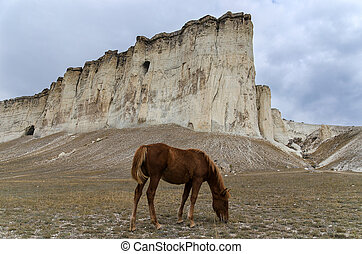 horse and rock