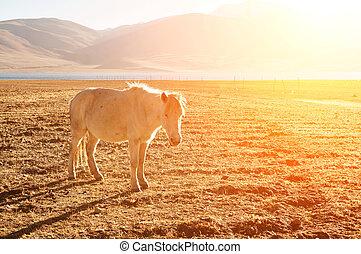 Horse at grass land
