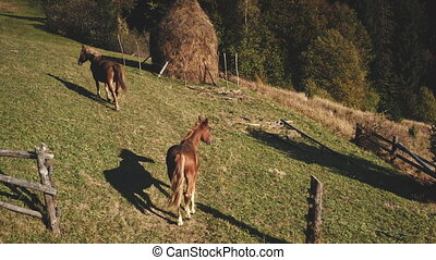 Horse at green grass mountain hill aerial. Farm animals biodiversity. Autumn nature landscape. Rural pastures at pine trees forest. Countryside scenery. Vacation at Carpathian mounts, Ukraine, Europe