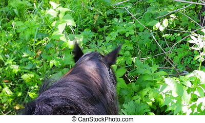 horse at rest is fed in forest.