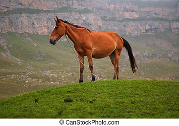 Horse at the top of hill