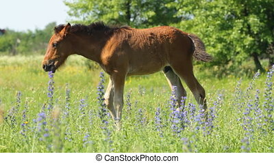 Horse baby on the green  meadow