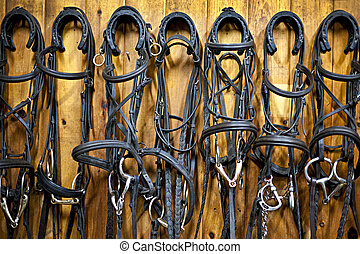 Horse bridles hanging in stable - Leather horse bridles and...