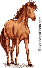 Horse brown foal or stud vector sketch for racing - Horse...