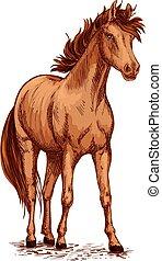 Horse brown foal or stud vector sketch for racing - Horse...