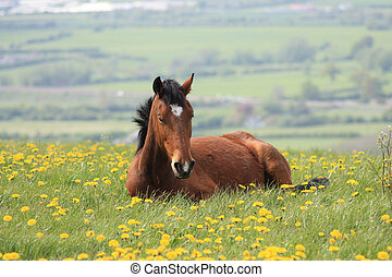 Brown horse in English countryside