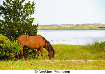 Horse By the Water