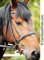 horse., cabeza, cierre, arriba.