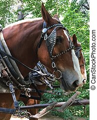 Horse Carriage in Sturbridge, MA