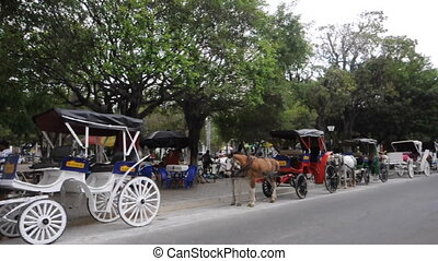 horse carriages leon nicaragua - tourist horse carriages for...