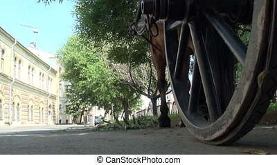 Horse cart on the road