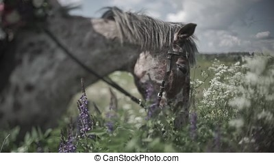 Horse chewing the grass on a background of nature. Close-up...
