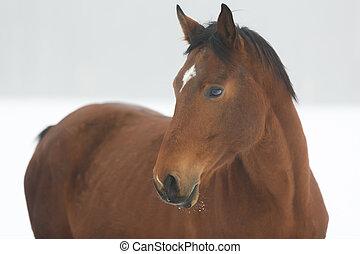 Horse close up in fog