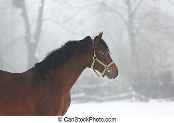 Horse close up in fog