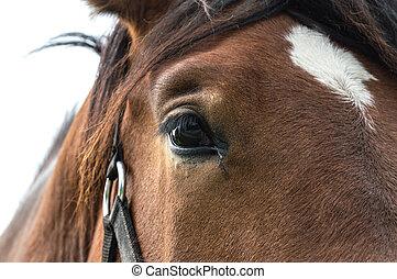 Close up of beautiful horse.