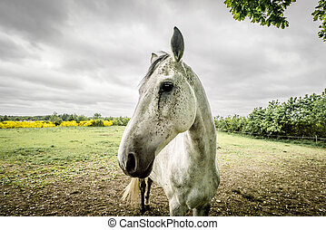 Horse close-up on a field in cloudy weather
