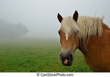 horse close up with fog