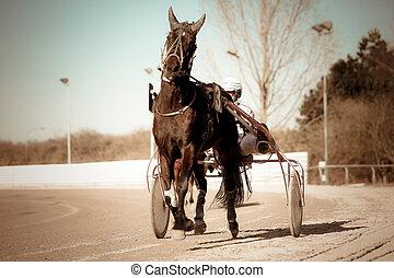 .horse, courses, harnais