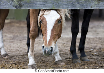 Young curious colt who looks directly into the camera