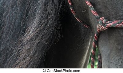 Horse detail,fur and mane. Detail of a horse head with...