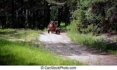 Horse drawn carriage drives on fore - Horse drawn carriage...