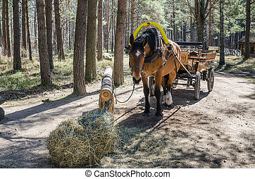 Horse-drawn carriage in close up