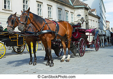 Horse-drawn Carriage in Vienna at the famous Stephansdom...