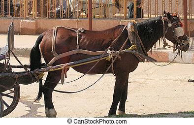 Horse drawn carriage, Edfu, Egypt