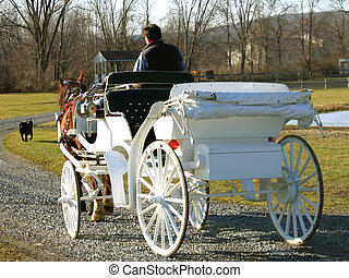 Horse Drawn Carriage - White carriage drawn by Clydesdale