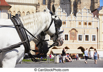 Horse drawn carriage in Old Town square in Prague.