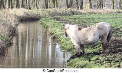 Horse drinking water from a stream