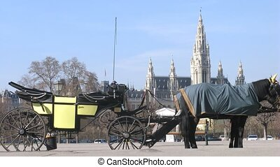 Horse-driven carriage stand on street in front of Rathaus