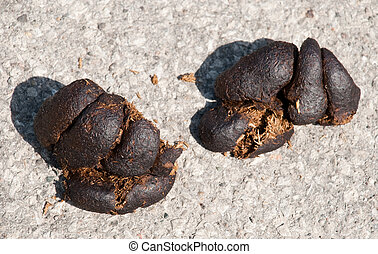 Horse droppings in the middle of a big city street.