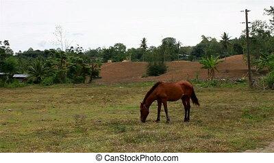 horse eat grass - horse in a farm eats grass