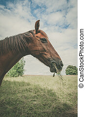 Horse eating grass on a green meadow