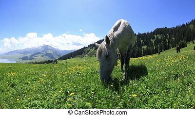 horse eating grass on beautiful mountain grassland
