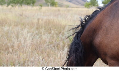 Horse eating grass on the field at summer time