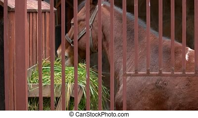 Horse eating green grass in a stable. Feeding of purebred...