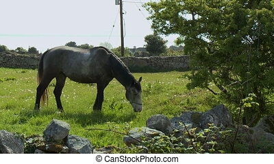 Horse Eating in Field